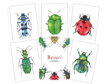 Obrázek Brouci