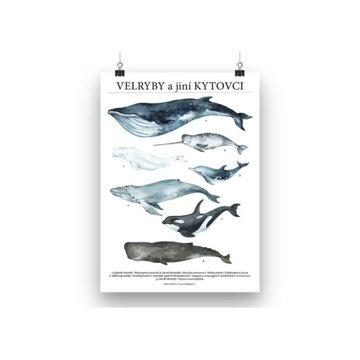 Obrázek Velryby a jíní kytovci